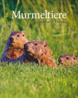 Murmeltiere - Niveau B1 Deutsch als Fremdsprache